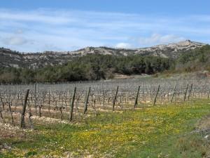 Camp wine fields.