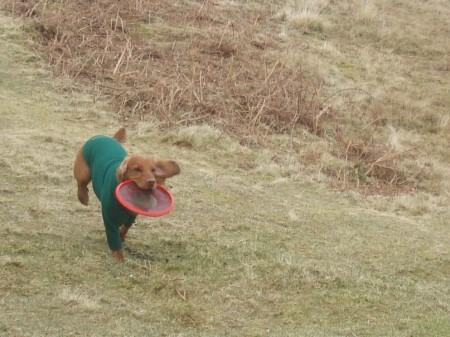 Frisbee champion.